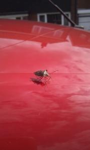 Weird Bug