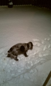 Henry snow