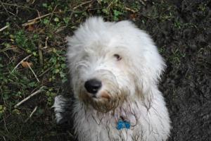 Muddy Oli