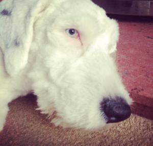 Oli's blue eye