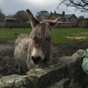 donkey april 2016